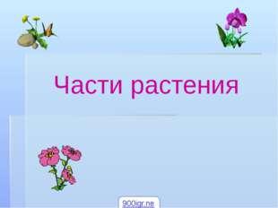Части растения 900igr.net