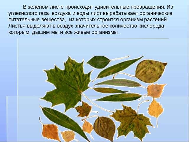 В зелёном листе происходят удивительные превращения. Из углекислого газа, во...