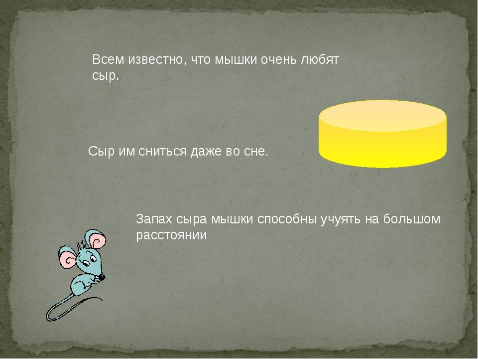 Всем известно, что мышки очень любят сыр. Сыр им сниться даже во сне. Запах с...