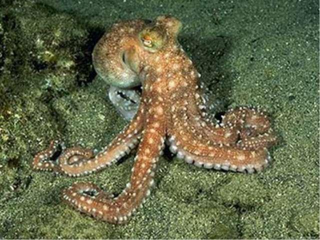 Ресурсы Мирового океана (биологические) Биомасса насчитывает 140 тыс. видов –...