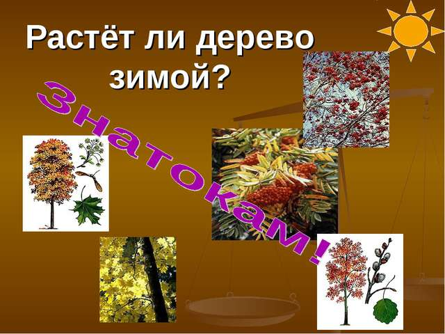 Растёт ли дерево зимой?
