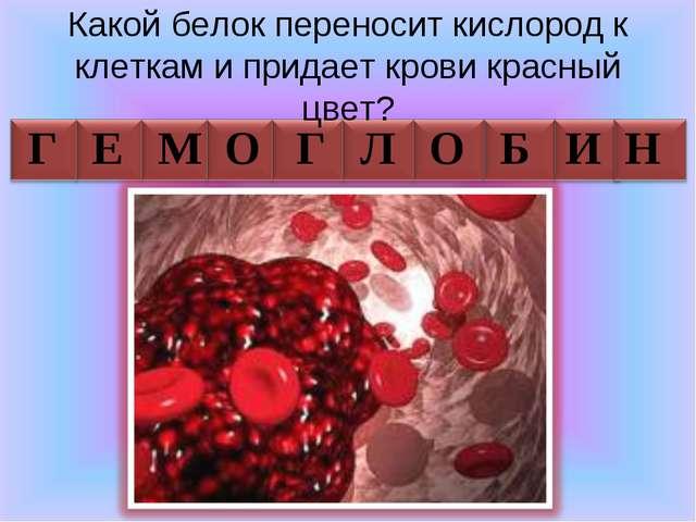 Какой белок переносит кислород к клеткам и придает крови красный цвет? Г Е М...