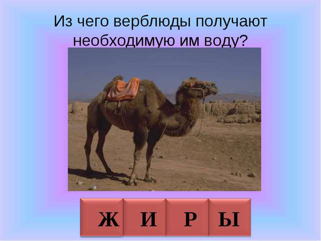 Из чего верблюды получают необходимую им воду? Ж И Р Ы