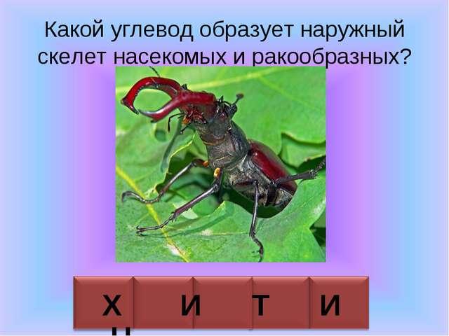 Какой углевод образует наружный скелет насекомых и ракообразных? Х И Т И Н
