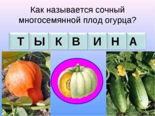 Как называется сочный многосемянной плод огурца? Т Ы К В И Н А