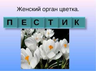Женский орган цветка. П Е С Т И К