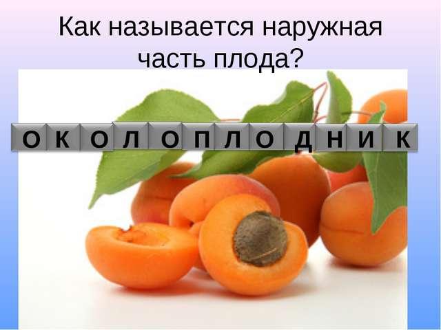 Как называется наружная часть плода? О К О Л О П Л О Д Н И К