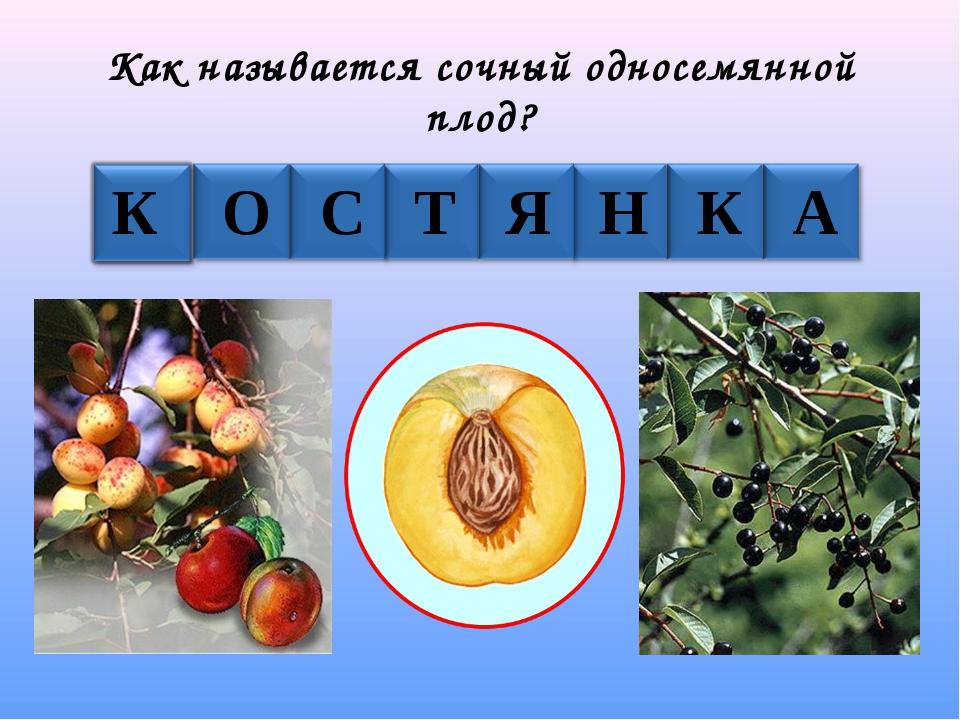 Как называется сочный односемянной плод? К О С Т Я Н К А