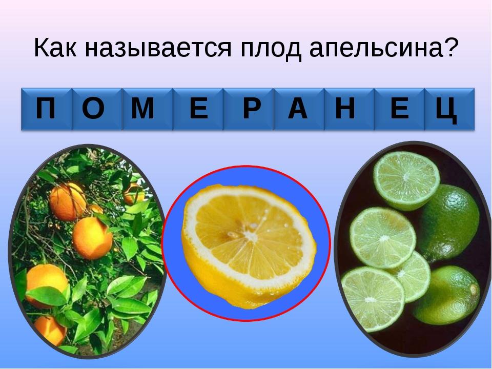 Как называется плод апельсина? П О М Е Р А Н Е Ц