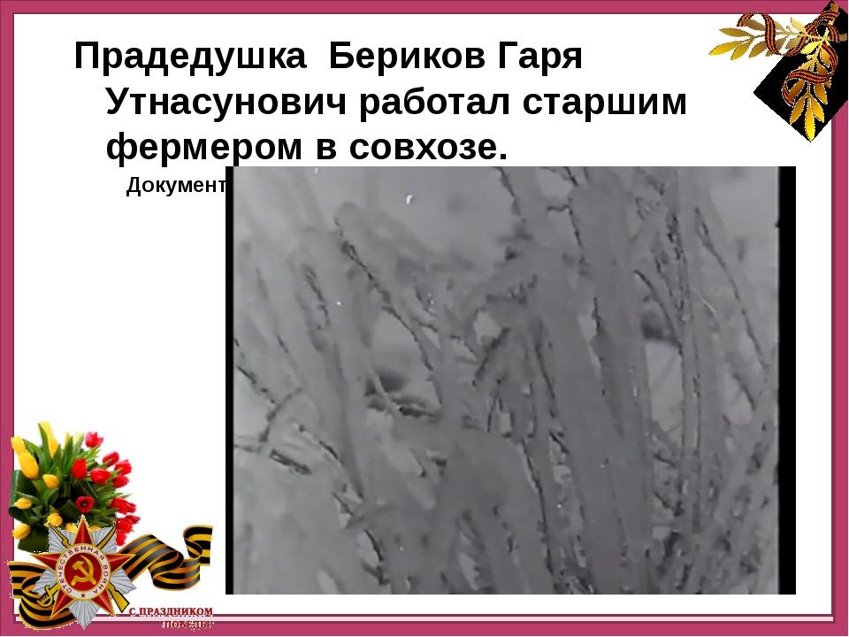 Прадедушка работал старшим фермером в совхозе. Прадедушка Бериков Гаря Утнас...
