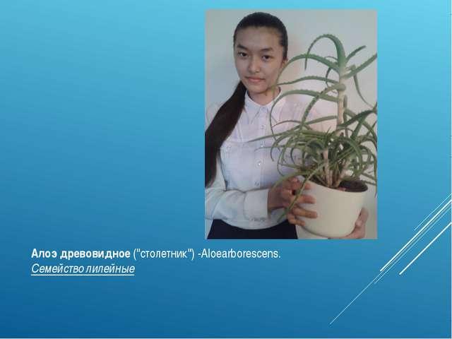 """Алоэ древовидное(""""столетник"""") -Aloearborescens. Семейство лилейные"""