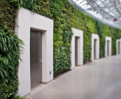 Стена дома в зелени