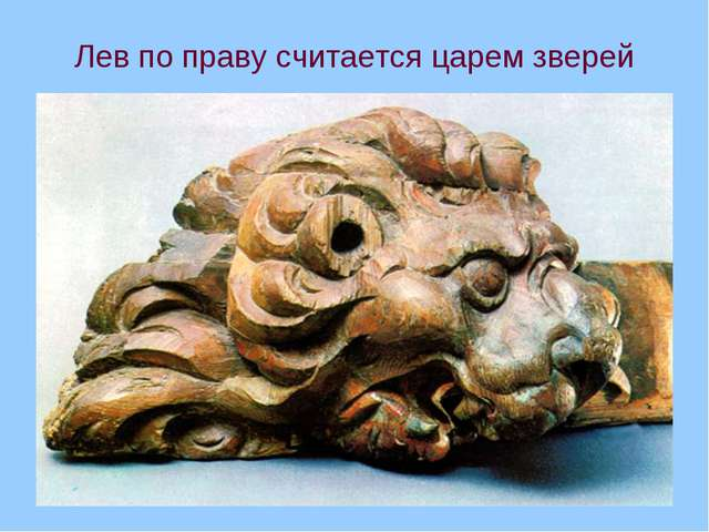 Лев по праву считается царем зверей