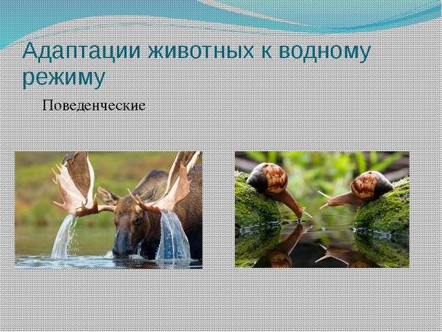 Адаптации животных к водному режиму Поведенческие