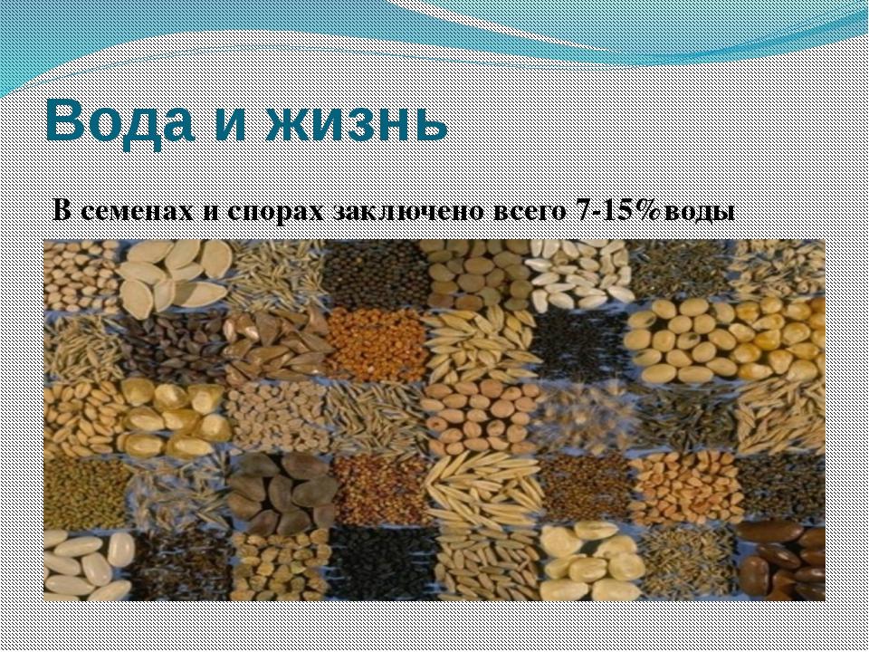 Вода и жизнь В семенах и спорах заключено всего 7-15%воды