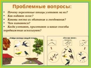 Почему перелетные птицы улетают на юг? Как подают голос? Каковы места их оби