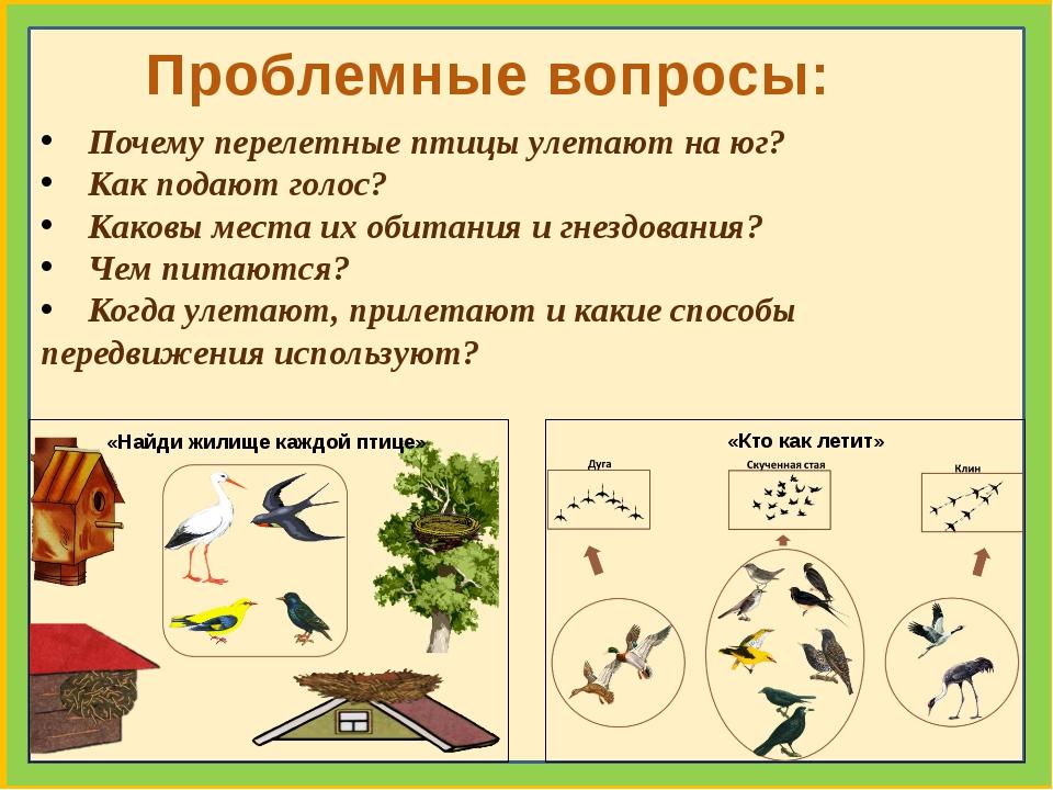 Почему перелетные птицы улетают на юг? Как подают голос? Каковы места их оби...