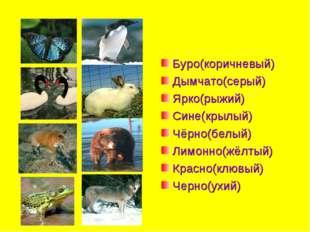 Буро(коричневый) Дымчато(серый) Ярко(рыжий) Сине(крылый) Чёрно(белый) Лимонно