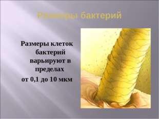 Размеры бактерий Размеры клеток бактерий варьируют в пределах от 0,1 до 10 мкм