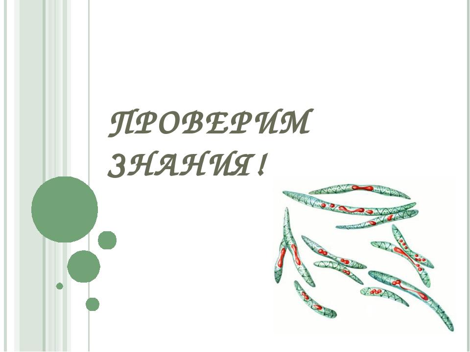 ПРОВЕРИМ ЗНАНИЯ!
