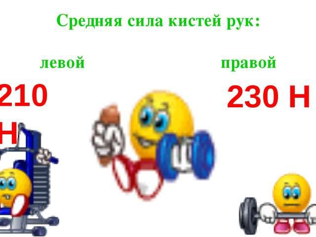 Средняя сила кистей рук: левой правой 210 Н 230 Н