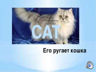 Его ругает кошка CAT