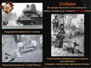 Во время Великой Отечественной войны на фронтах служило: 40 000 собак Собаки