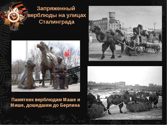 Запряженный верблюды на улицах Сталинграда Памятник верблюдам Маше и Мише, до...
