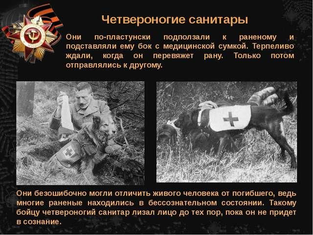 Четвероногие санитары Они по-пластунски подползали к раненому и подставляли е...