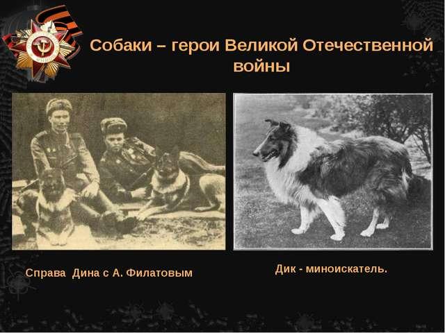 Справа Дина с А. Филатовым Собаки – герои Великой Отечественной войны Дик - м...