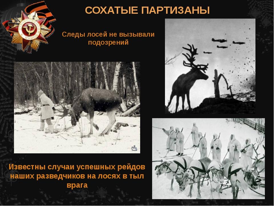Известны случаи успешных рейдов наших разведчиков на лосях в тыл врага СОХАТЫ...