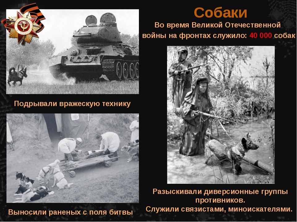 Во время Великой Отечественной войны на фронтах служило: 40 000 собак Собаки...
