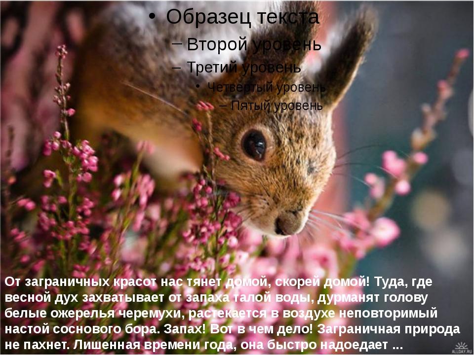 От заграничных красот нас тянет домой, скорей домой! Туда, где весной дух за...