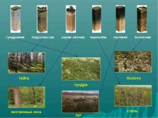 тундра тайга лиственные леса болото луг степь тундровая подзолистая серая лес