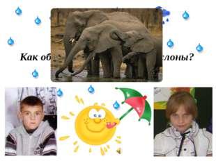Как общаются между собой слоны?