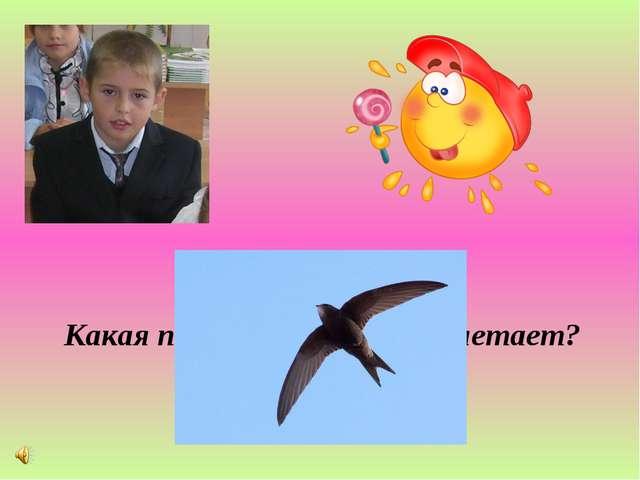 Какая птица быстрее всех летает?