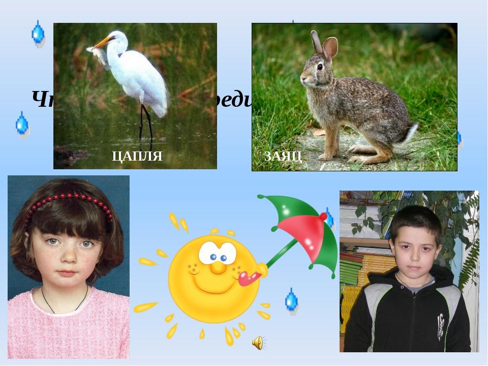 Что у цапли впереди, а у зайца позади? ЦАПЛЯ ЗАЯЦ