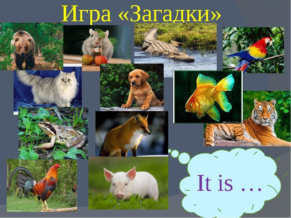 Игра «Загадки» It is …