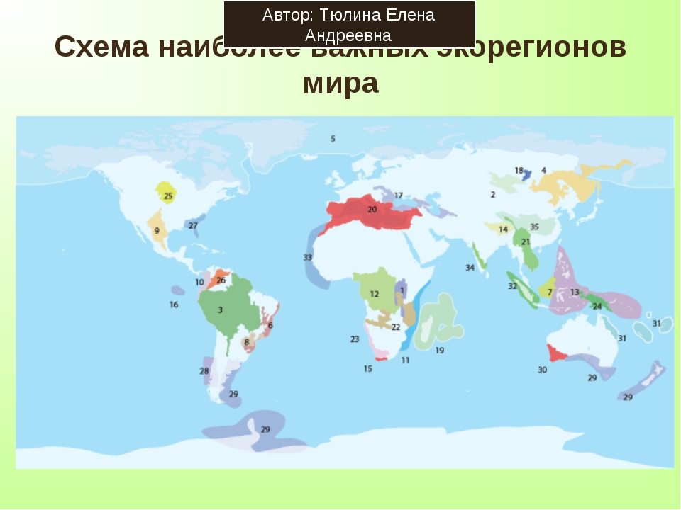 Схема наиболее важных экорегионов мира Автор: Тюлина Елена Андреевна