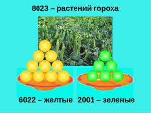6022 – желтые 2001 – зеленые 8023 – растений гороха