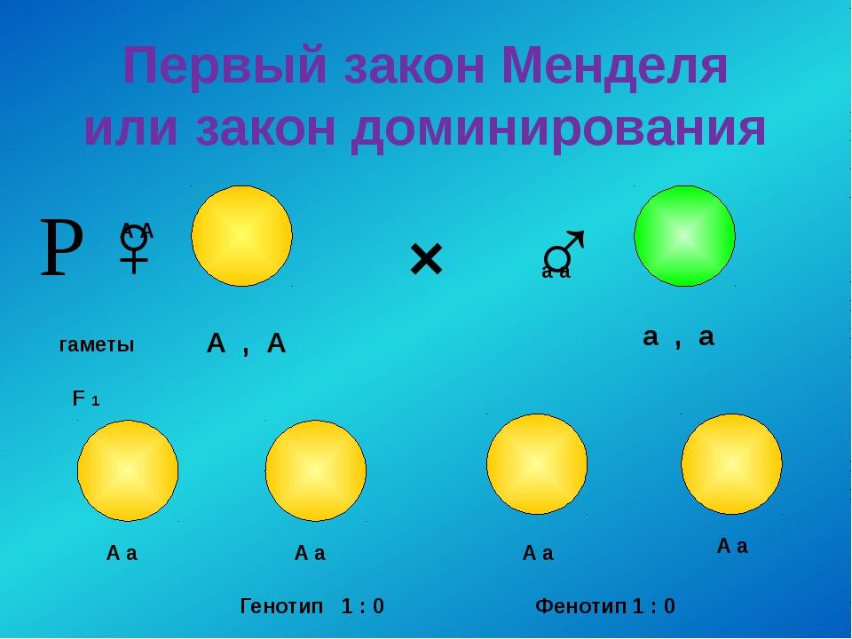 Первый закон Менделя или закон доминирования × ♀ ♂ гаметы А А а а F 1 А , А а...