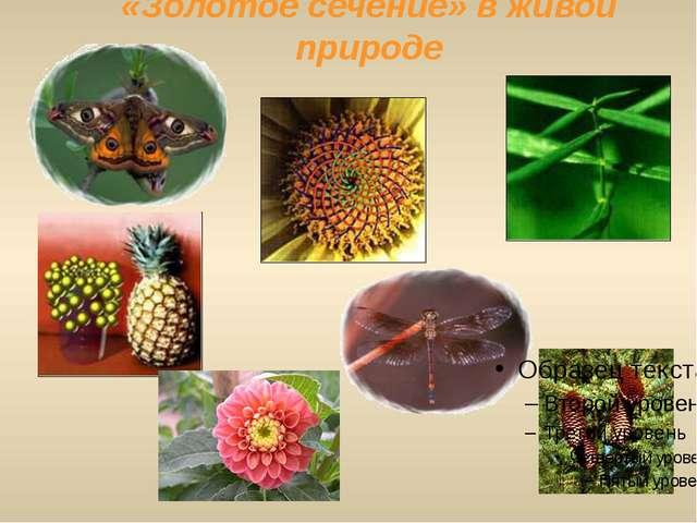 «Золотое сечение» в живой природе