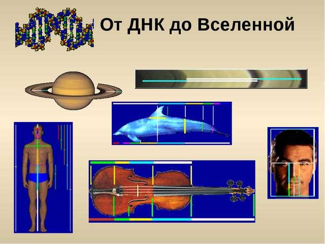 От ДНК до Вселенной