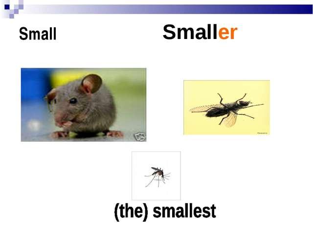 Small Smaller