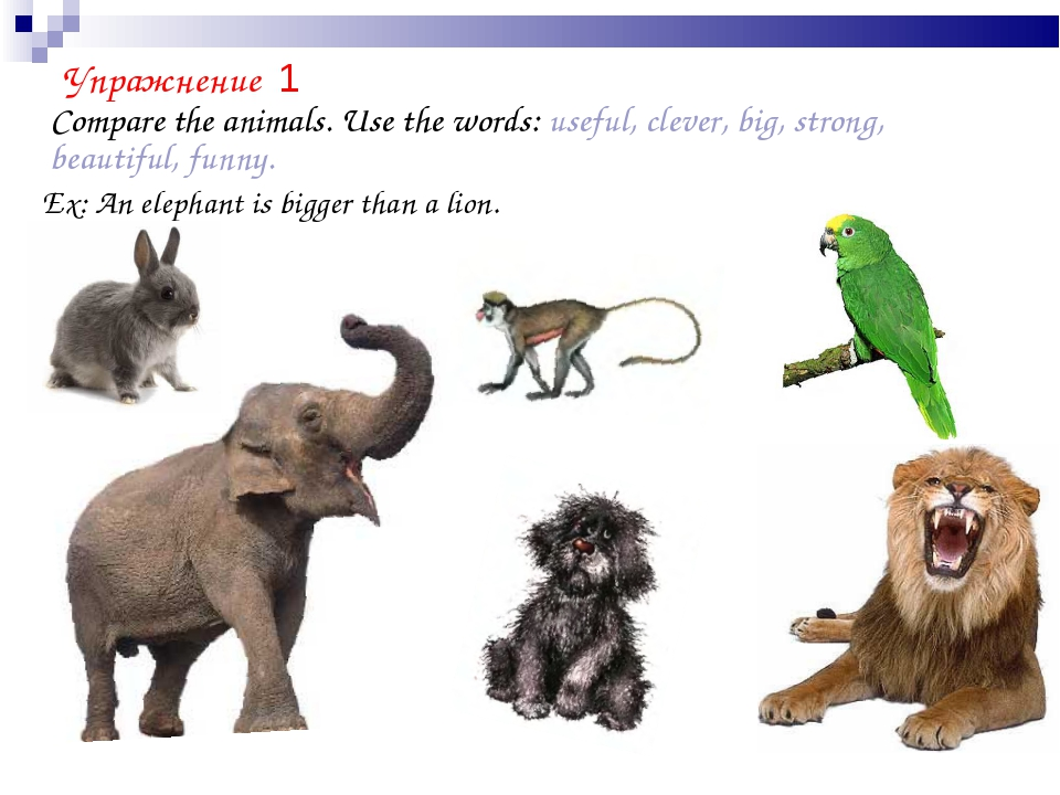 Compare the animals. Use the words: useful, clever, big, strong, beautiful,...