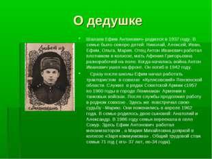 О дедушке Шалаев Ефим Антонович- родился в 1937 году. В семье было семеро дет