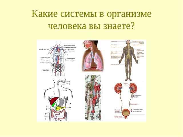 Какие системы в организме человека вы знаете?