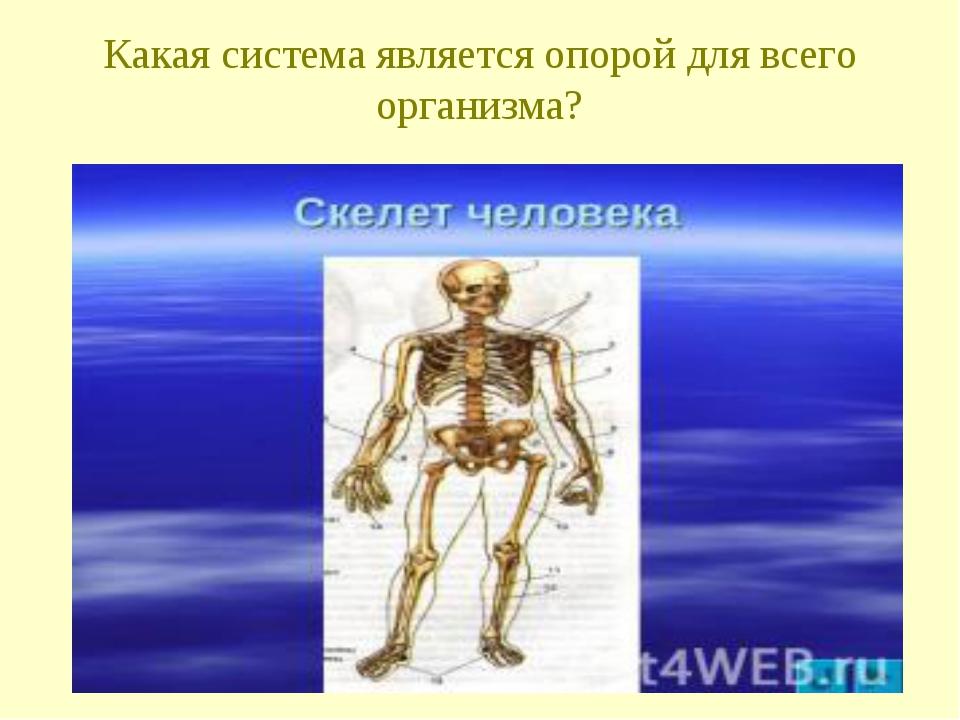 Какая система является опорой для всего организма?