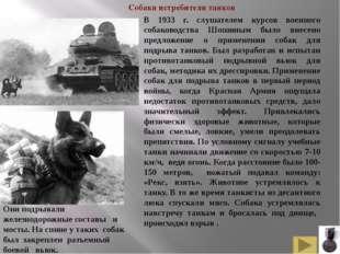 Белорусские и русские партизаны приручили и использовали для рейдов по тылам