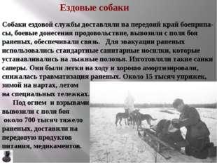 . В сражениях в Крыму и на Северном Кавказе самые тяжёлые грузы таскали вынос